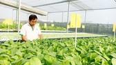 Khởi nghiệp nông nghiệp công nghệ cao là xu thế, nhưng có tính phong trào