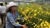 Sản xuất hoa nhiệt đới trở thành thế mạnh của nông nghiệp đô thị TPHCM. Ảnh: THANH HẢI