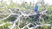 2,5ha rừng phòng hộ trên núi Cheng Leng bị chặt phá