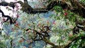 Vượt suối, băng rừng chinh phục Putaleng mùa núi nở hoa
