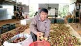 Đắk Nông phát triển cây trồng hiệu quả kinh tế cao