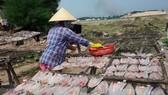 Phạt nặng các cơ sở sử dụng chất cấm trong sản xuất thủy sản khô