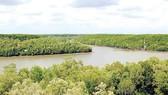 40 năm phục hồi thành công rừng ngập mặn Cần Giờ