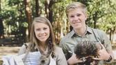 """Chương trình mới của gia đình """"thợ săn cá sấu"""" Irwin"""