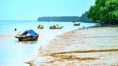 Bãi bồi ven biển ở Cù Lao Dung