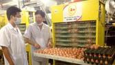 Hướng đến xuất khẩu trứng gia cầm