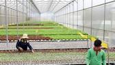 Bình Phước cần tập trung xây dựng vùng nông nghiệp công nghệ cao