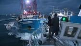 Ngư dân Anh, Pháp đại chiến tranh giành sò điệp. Ảnh: BBC