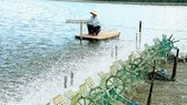 High-Tech agricultural zone for breeding shrimp in Bac Lieu set up