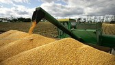 Vietnam to grow 1.26 mln ha of corn