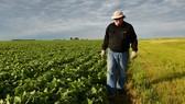 Mỹ công bố hỗ trợ 12 tỷ USD cho nông dân bị thiệt hại do các đòn trả đũa thương mại. Nguồn: EAST AUTO NEWS