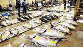 Chợ đấu giá cá ngừ gặp khó vì nắng nóng