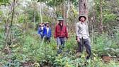 Các cựu chiến binh thôn Phú Danh trên đường tuần tra, bảo vệ rừng