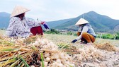 Nước mắt tỏi Khánh Hòa