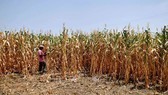 Dự án môi trường tại Vành đai khô hạn El Salvador