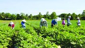 26 sinh viên từ 8 quốc gia trong khu vực châu Á - Thái Bình Dương tìm hiểu phương thức canh tác nông
