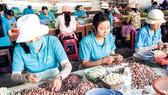 Phát triển nông sản Việt Nam: Tư duy ngắn, thiếu tầm nhìn