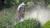 Nguy cơ thuốc bảo vệ thực vật