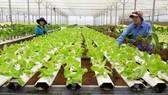 Tạo cú hích phát triển nông nghiệp