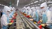 Chế biến tôm đông lạnh xuất khẩu tại nhà máy ở khu công nghiệp phường 8, thành phố Cà Mau.