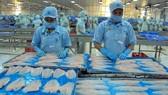 Khuyến cáo kiểm soát chất lượng cá tra xuất sang Trung Quốc