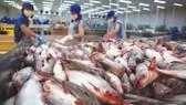 Hệ thống kiểm soát cá da trơn của Việt Nam tương đương với Hoa Kỳ