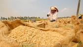 Vinafood 2 ký hợp đồng bán gạo tỉ đô cho Philippines