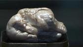 """這顆珍珠被稱為""""睡獅"""""""