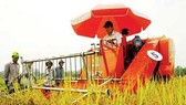 Government decides to reserve 1 million tons of rice