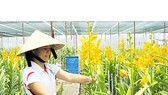 Agriculture thrives on former battlefield of Cu Chi