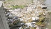 Trung Quốc: 1.200 xác lợn trôi sông Hoàng Phố