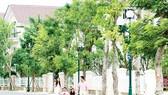 Vincom Village xứng đáng là khu đô thị đẳng cấp tại Việt Nam