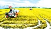 Improved conditions in Mekong Delta after implementation of Resolution