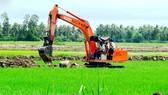 Cà Mau: Nguy cơ phá vỡ quy hoạch cánh đồng mẫu lớn