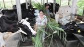 TPHCM xây dựng nông thôn mới. Bài 3: Về đích trước
