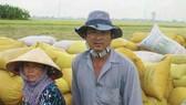 Đồng bằng sông Cửu Long: Phập phồng tiêu thụ lúa thu đông