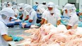 Ngành cá tra Việt Nam: Coi chừng thua trên sân nhà