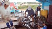 Ngành cá tra Việt Nam ứng phó với Farm Bill của Mỹ