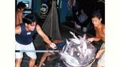 Hướng đi mới cho ngành cá tra
