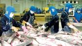 Lập lại trật tự ngành cá tra