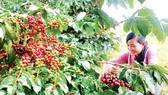 Tổng Công ty Tín Nghĩa xuất khẩu cà phê thứ 3 Việt Nam