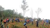 Trồng mới hơn 1.500 cây chuối cao sản giúp người dân tộc Chứt