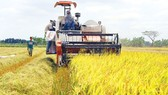 Farmers reap gains from new model