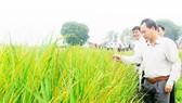 Tính kế sách mới cho ngành lúa gạo Việt Nam