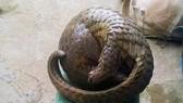 Bắt hai đối tượng săn bắt động vật quý hiếm tại rừng Quốc gia Cát Tiên