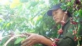 Internationally false reports pulls domestic coffee prices down