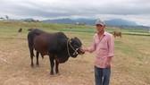 Đàn bò ở bãi bồi