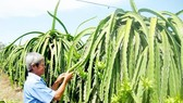 Experts finds new way to help farmers in Mekong delta