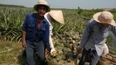 Điểm sáng trong xuất khẩu nông sản