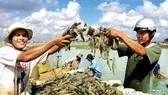 Việt Nam và Hoa Kỳ ký thỏa thuận chống bán phá giá tôm